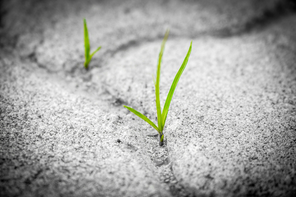 Grass grows through the seams of the pavement.