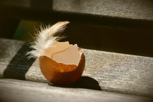A small feather perches on half an eggshell resting on a wooden slat.